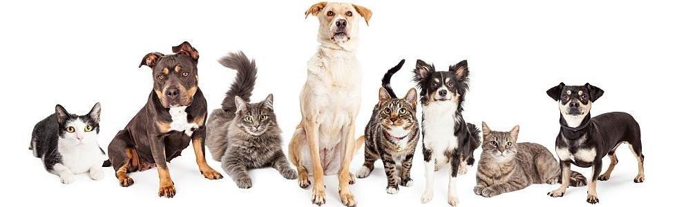 Le vaccinazioni del cane e del gatto